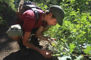 Alex investigating a medicinal Ceanothus spp. in southern Colorado