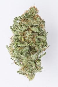 Alex Pullen Cannabis Photography-4839